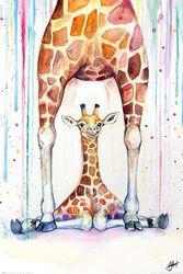 Marc Allante Gorgeous Giraffes
